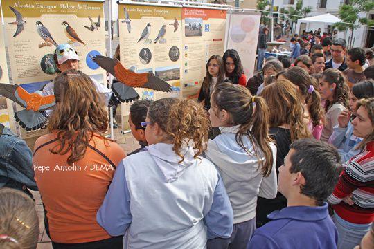 Exposición Halcones Mediterráneos