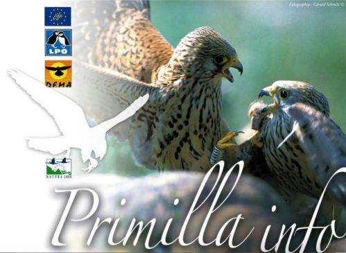 Primilla Info