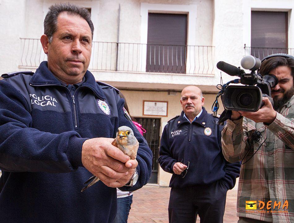 El policía que rescató al cernícalo primilla segundos antes de devolverlo a su colonia, en la Iglesia de la Purificación de Almendralejo