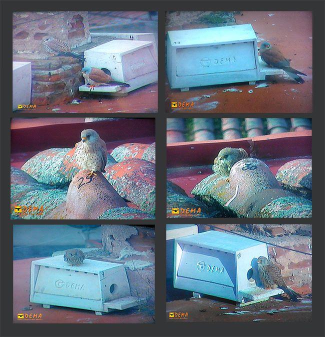 Imágenes obtenidas a través delos monitores del sistema de video vigilancia