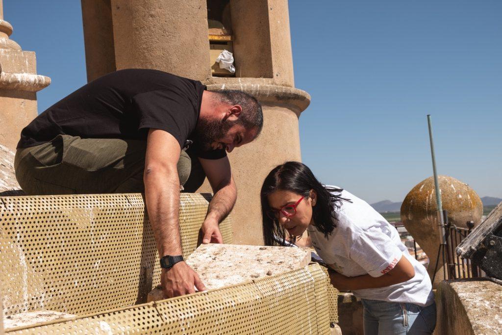 Comprobación de un nido durante el censo den la Iglesia de la Purificación