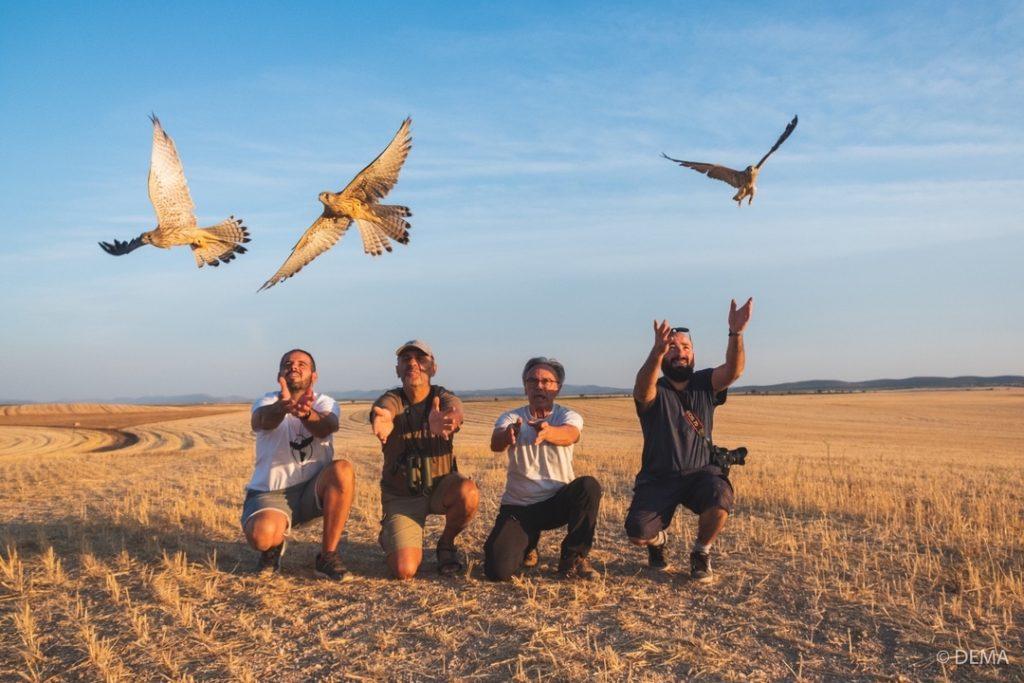 Grupo de participantes en el momento de liberar varios ejemplares de cernícalo primilla