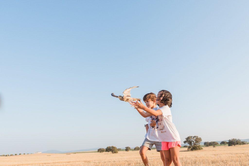 Momento de la liberación de dos cernícalos primilla en el campo por parte de dos niños