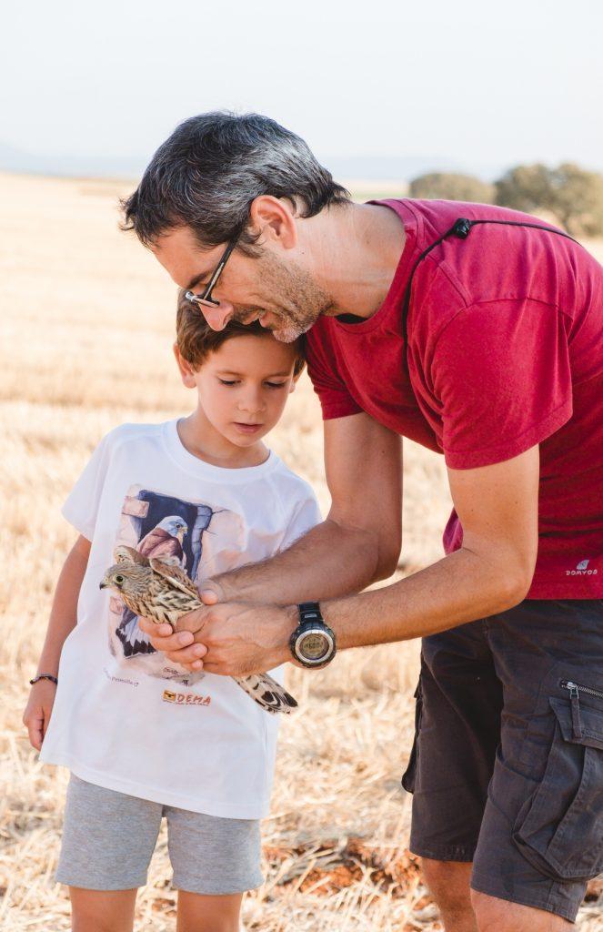 Antes de liberar a un cernícalo primilla un padre y su hijo observan con detalle su plumaje