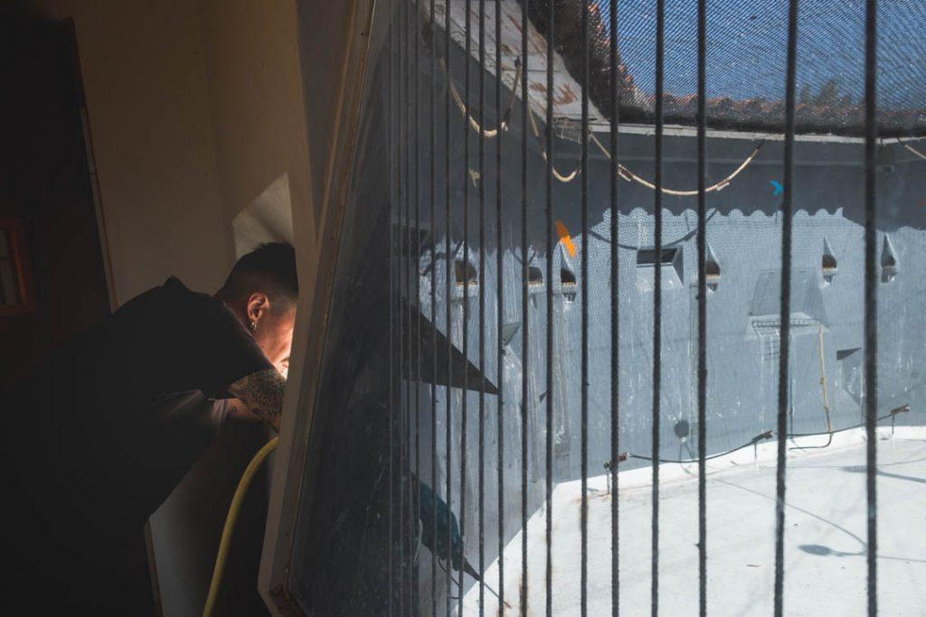 Limpieza diaria de las instalaciones de cría en cautividad de cernícalo primilla