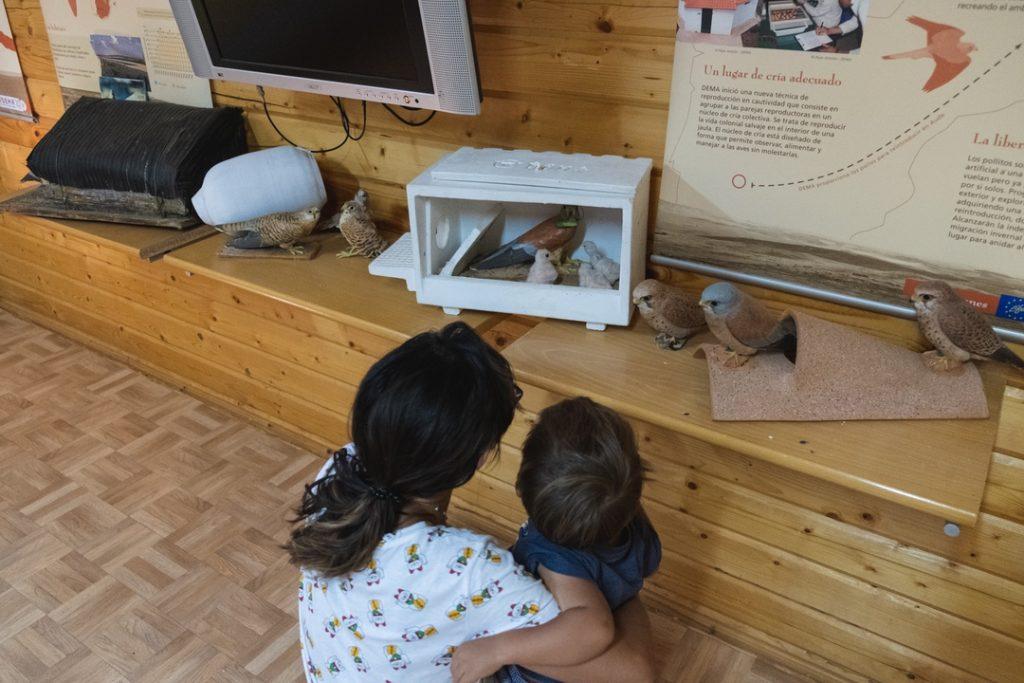 Visita de familias a las instalaciones del centro de cría de cernícalo primilla de Almendralejo